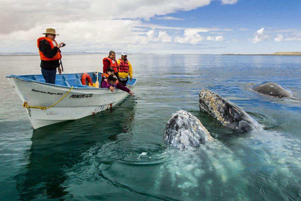 Personas interactuando con ballenas
