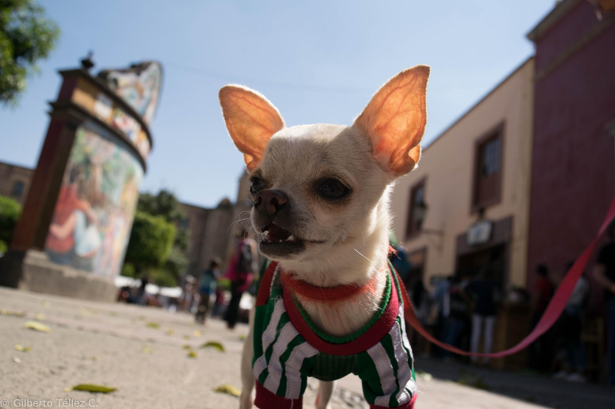 tequila_mascota